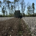 photo of Cotton Picker picking cotton