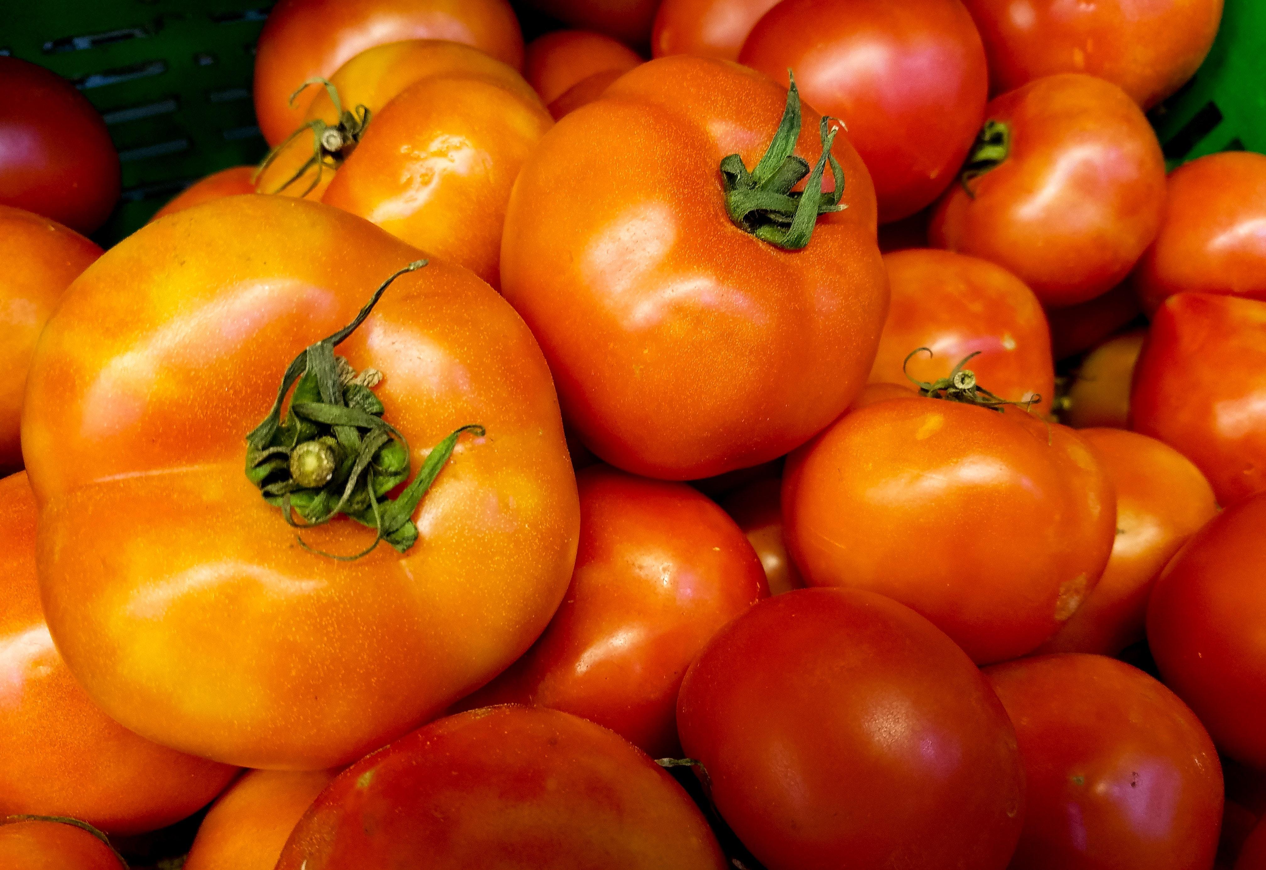"Large ripe tomatoes"" width="
