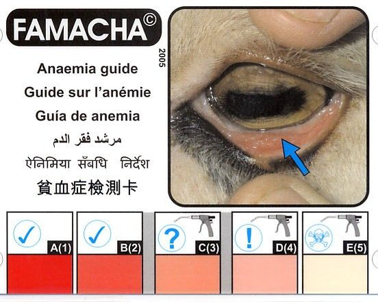 Image of anaemia
