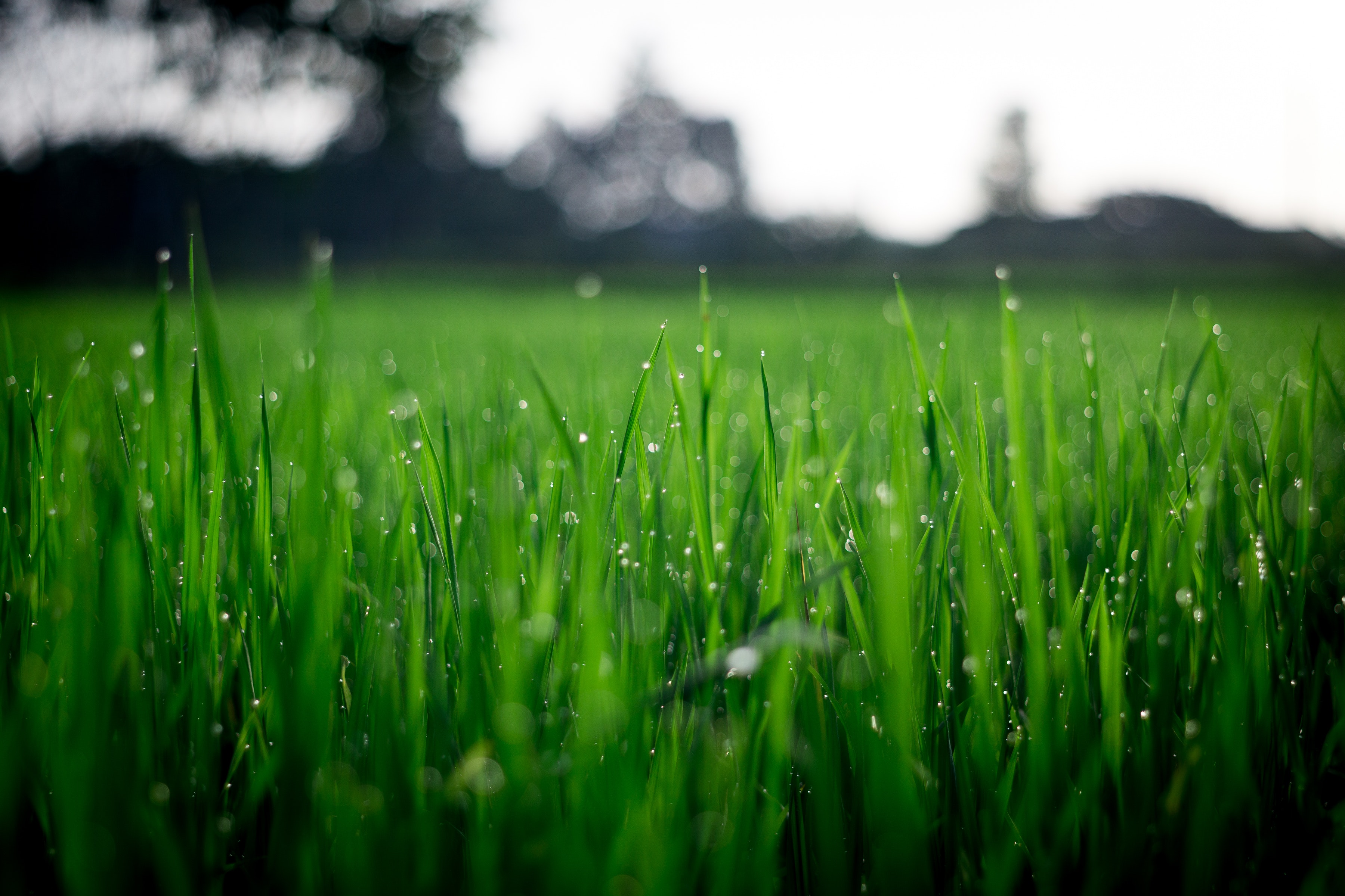 Image of dew on grass