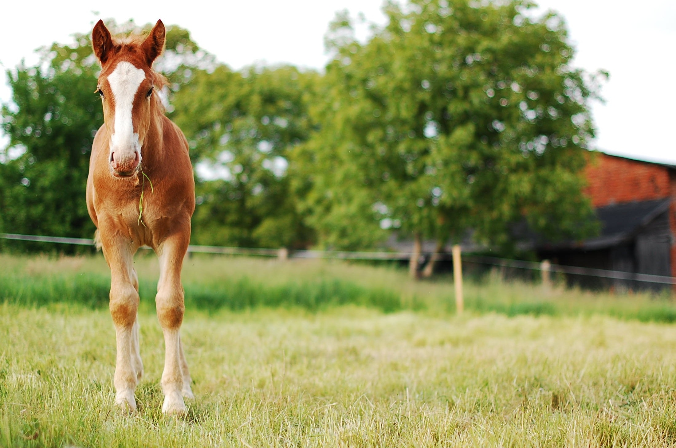 Image of a horse in a pasture