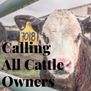 Cover photo for Cattle Referendum Vote Scheduled for October 4th