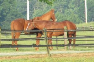 Cover photo for Equine Workshop April 8 in Mocksville